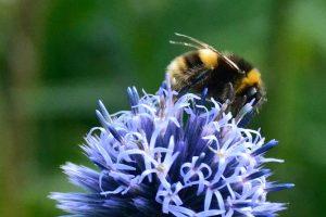 Especies exóticas, la otra amenaza a la biodiversidad