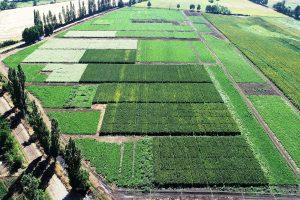 Polo de granos ancestrales logra aumentar en 77% superficie de quinoa en Chile